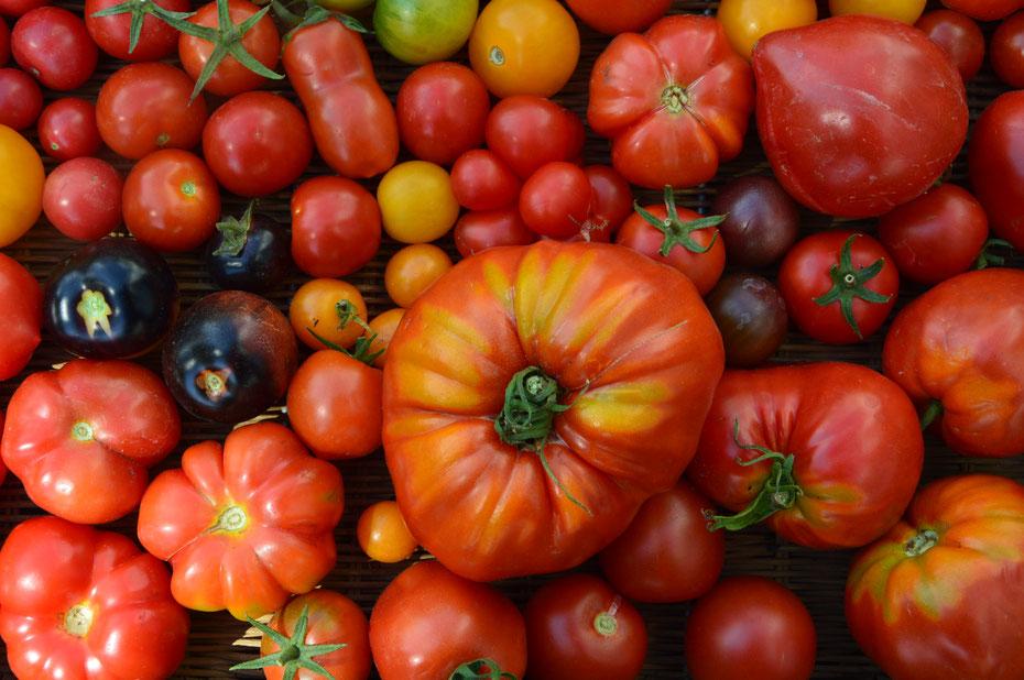 Historische Tomaten-Sorten